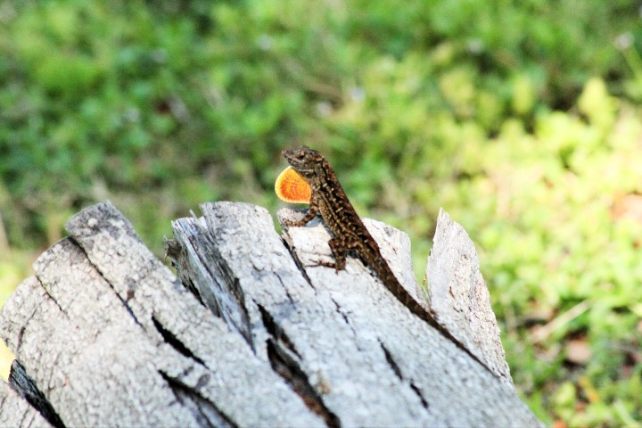 ElR_Lizard1 (Small).JPG