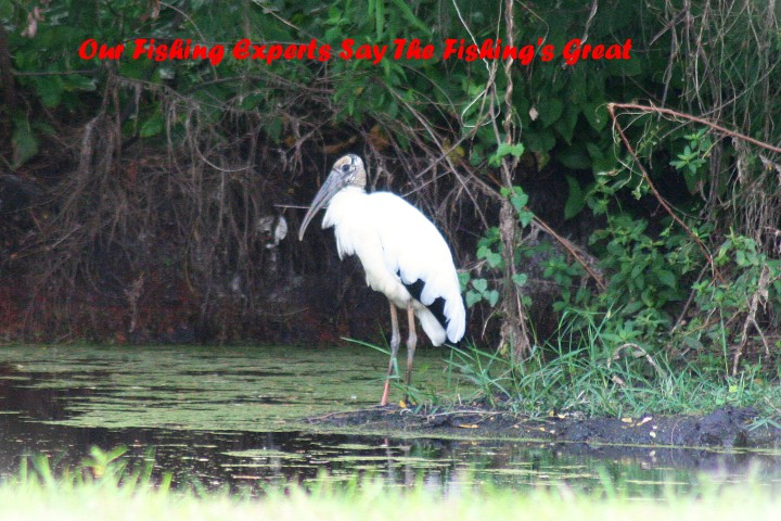 ElR_Woodstork_Fishing_2012 (2) (Small).JPG